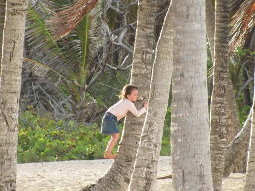 Bientôt les cocos...
